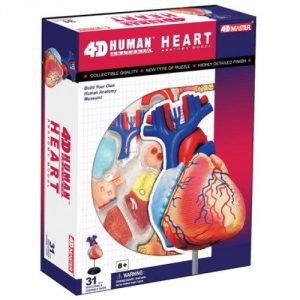 4-d-anatomy-heart-model.jpg