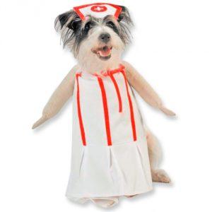 168386-nurse-pet-costume.jpg